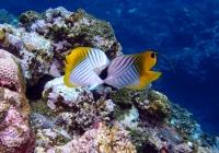 魚 5.jpg