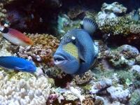 魚 4.jpg