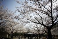 桜と機関車.jpg