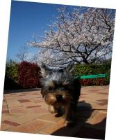 空と桜.jpg