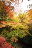 武田神社2.jpg