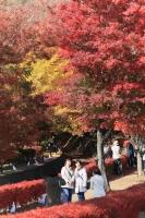 紅葉回廊.jpg